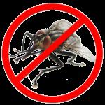 Как не получить «из мухи слона»