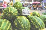 Начался сезон продажи бахчевых культур - арбузов и дынь